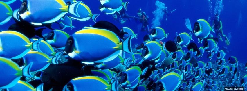 Photo fascinating fishes animals Facebook Cover for Free