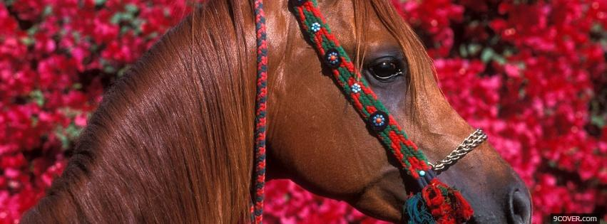 Photo horse and pink flowers Facebook Cover for Free