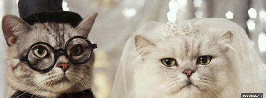 Photo getting married cats animals Facebook Cover for Free