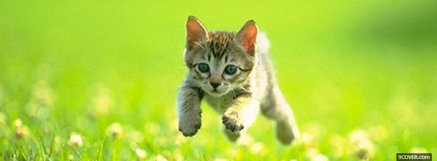 Photo jumping outside cat Facebook Cover for Free