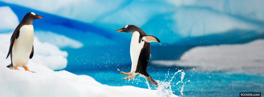 Photo adorable animals penguins Facebook Cover for Free