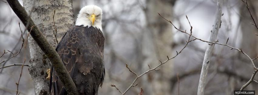 Photo eagle in the woods animals Facebook Cover for Free