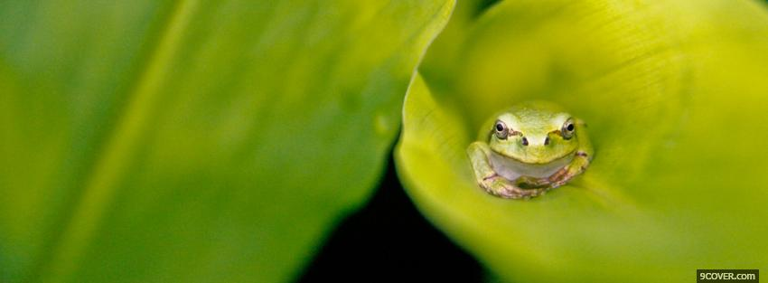 Photo frog on green leaf Facebook Cover for Free