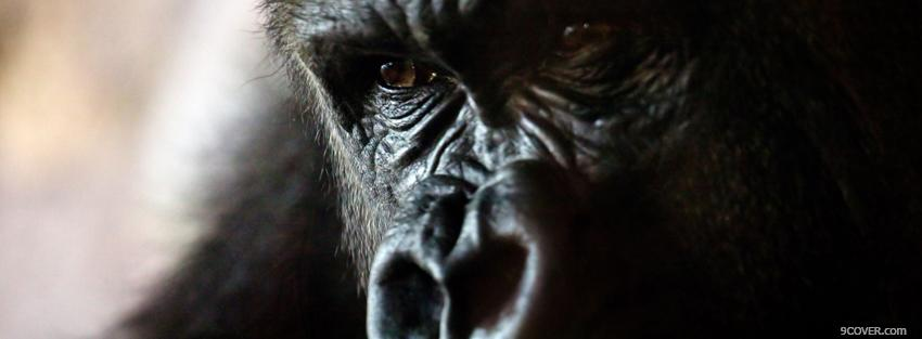 Photo gorilla face close up Facebook Cover for Free