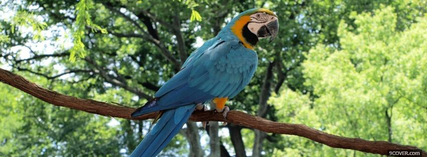 Photo macaw parrot outside Facebook Cover for Free