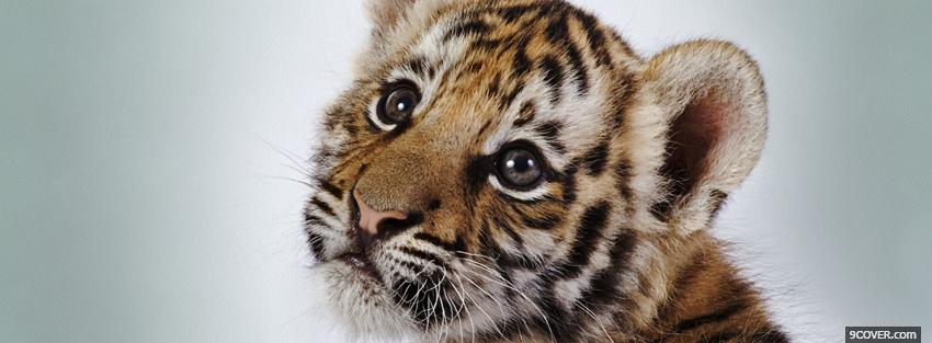 Photo Cutest Baby Tiger Animals Facebook Cover For Free