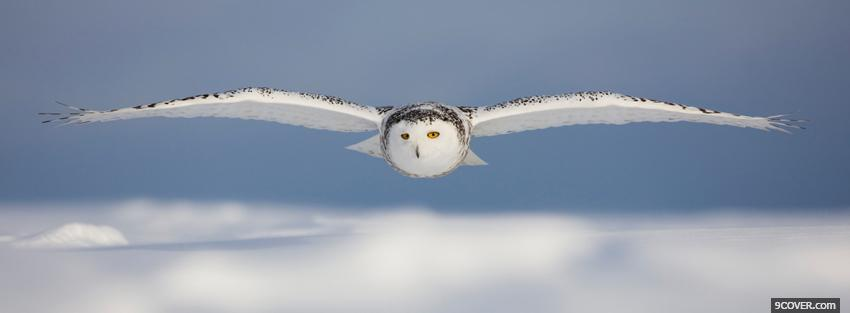 Photo flying owl animals Facebook Cover for Free