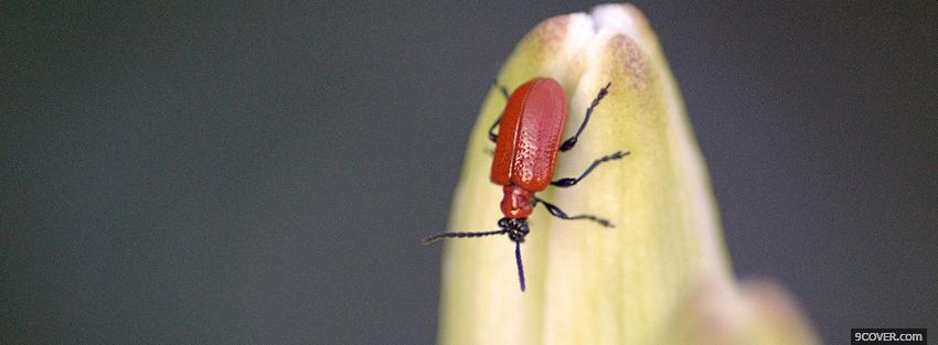 Photo red insect animals Facebook Cover for Free