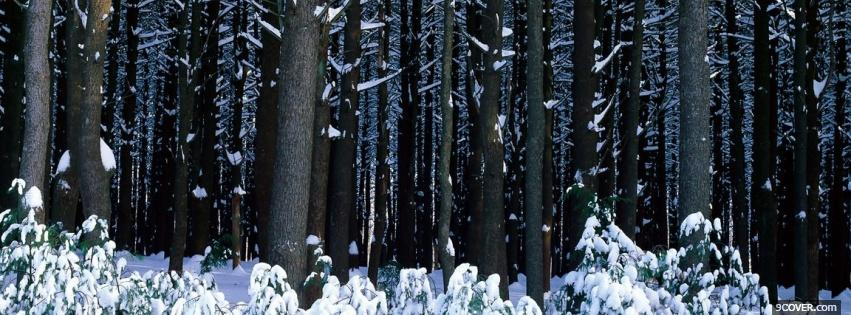 nature winter in the forest Profile Facebook Covers