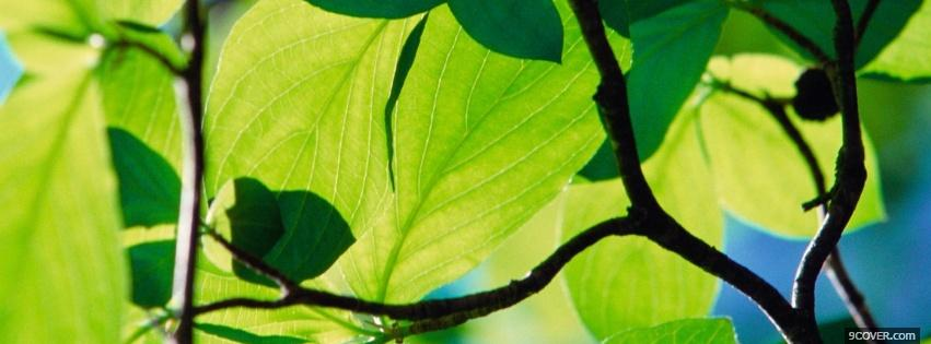 Photo nature green bright plants Facebook Cover for Free