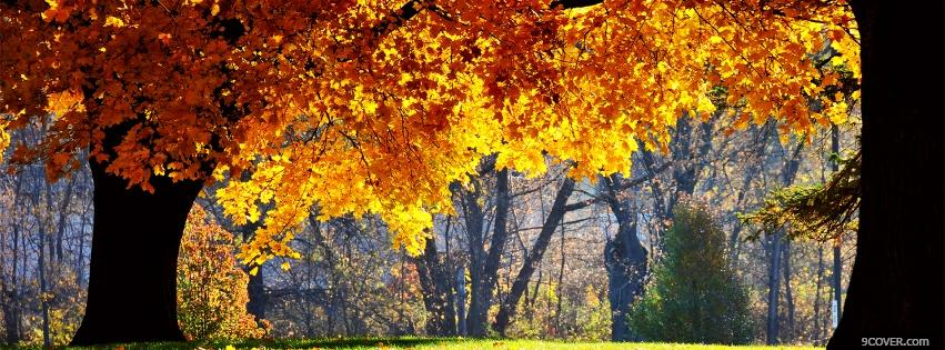Nature Autumn Trees Photo Facebook Cover