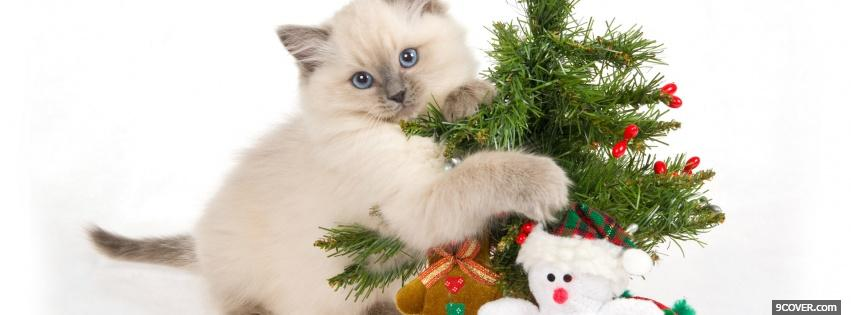 Photo kitten playing with christmas ornaments Facebook Cover for Free