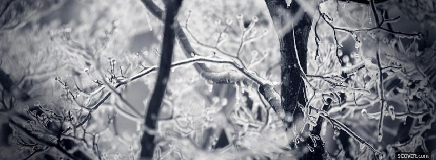 Photo iced branches Facebook Cover for Free