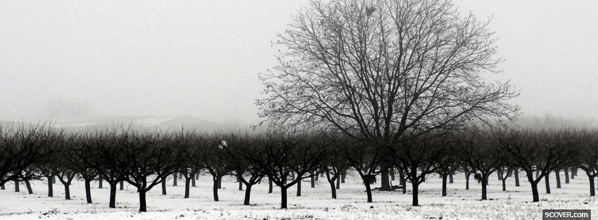 Photo winter season trees Facebook Cover for Free