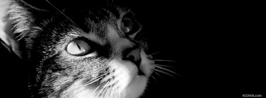 Photo black and white cat Facebook Cover for Free