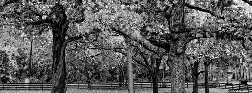 Photo black and white trees Facebook Cover for Free