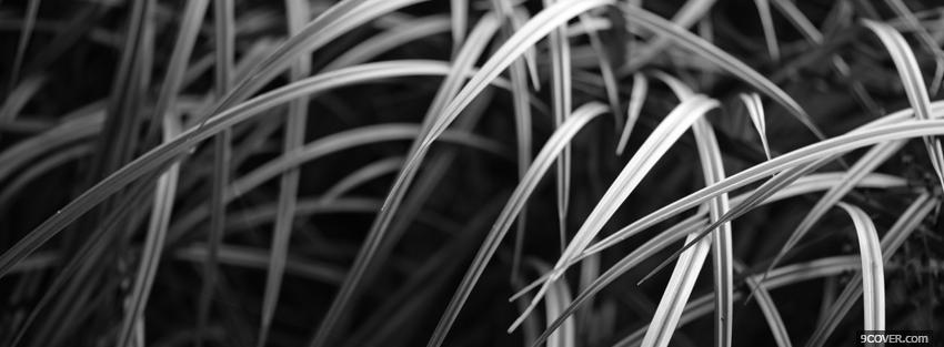 Photo black and white grass Facebook Cover for Free