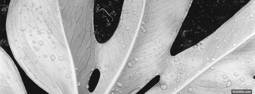 Photo black and white leaf Facebook Cover for Free