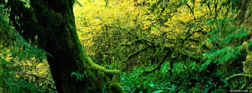 Photo hoh rain forest nature Facebook Cover for Free