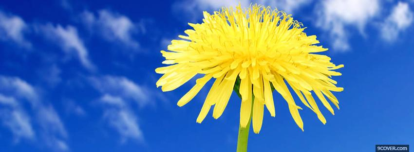 Photo blue sky and flower nature Facebook Cover for Free
