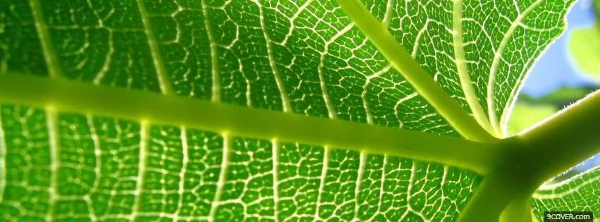Photo details of leaf nature Facebook Cover for Free