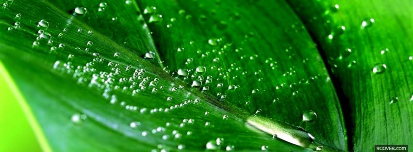 Photo green leaf wet nature Facebook Cover for Free