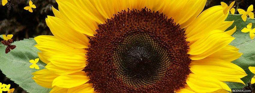 Photo big sunflower nature Facebook Cover for Free