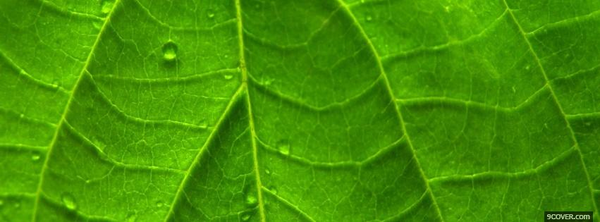 Photo leaf close up nature Facebook Cover for Free