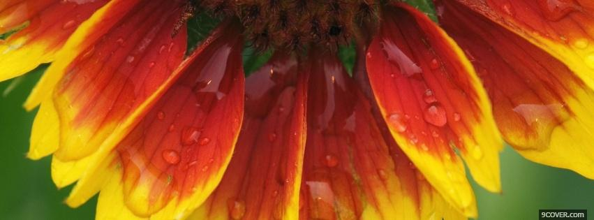 Photo blanket flower nature Facebook Cover for Free