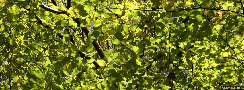 Photo green leaves nature Facebook Cover for Free