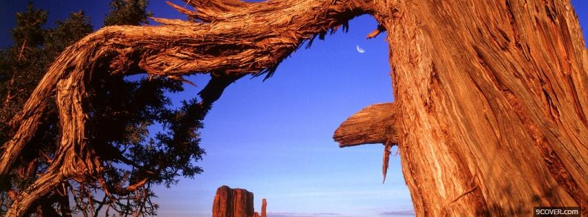 Photo old tree trunk nature Facebook Cover for Free