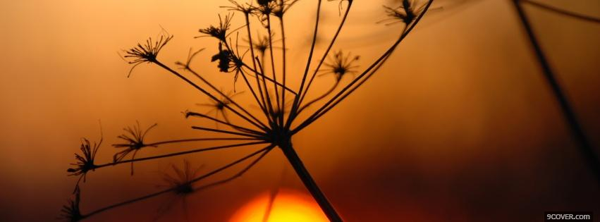Photo sunset plant nature Facebook Cover for Free