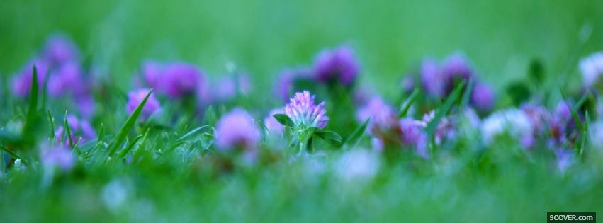 Photo purple flowers grass nature Facebook Cover for Free