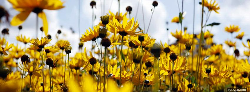 Photo sunflower garden nature Facebook Cover for Free