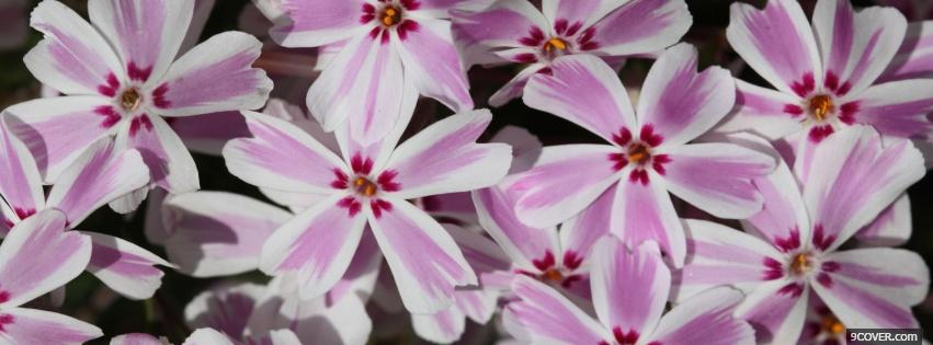 Photo pink cute flowers nature Facebook Cover for Free