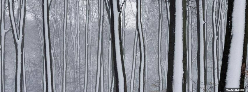 Photo snow on trees nature Facebook Cover for Free