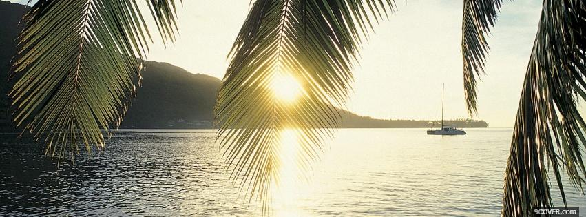 Photo sun and palm tree nature Facebook Cover for Free