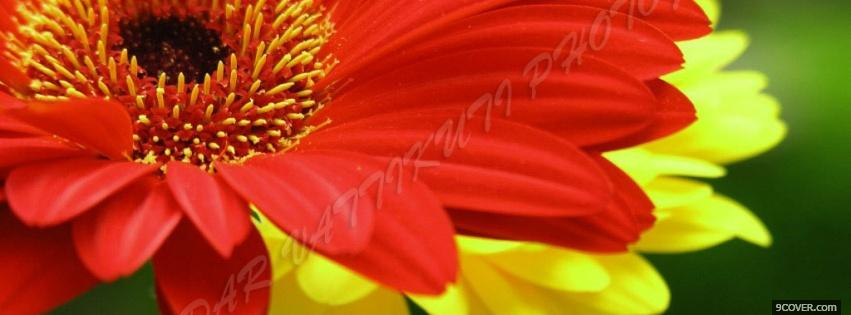 Photo red yellow flowers nature Facebook Cover for Free