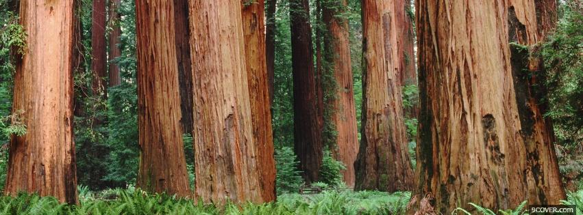 Photo tree trunks nature Facebook Cover for Free