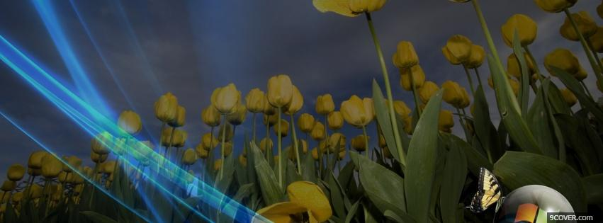 Photo yellow tulips butterfly Facebook Cover for Free
