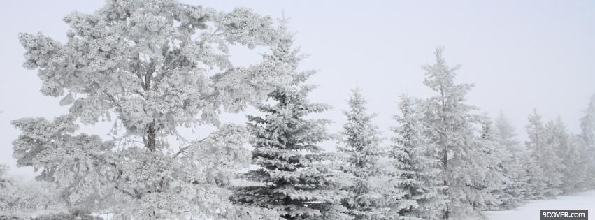 Photo pure white winer nature Facebook Cover for Free
