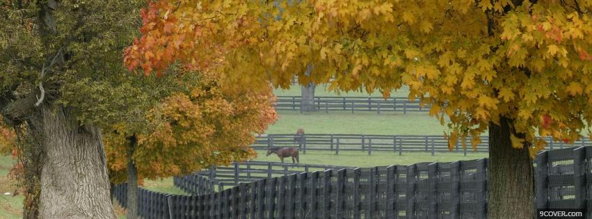 Photo autumn horse farm nature Facebook Cover for Free