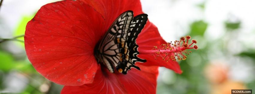 Photo butterfly and flower nature Facebook Cover for Free