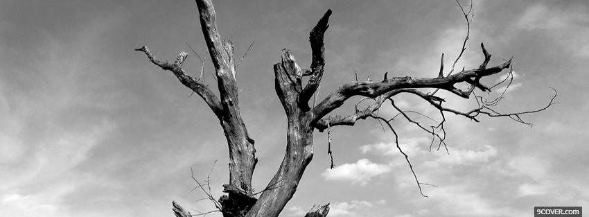 Photo dead tree Facebook Cover for Free
