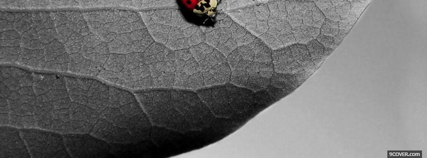 Photo red insect on leaf Facebook Cover for Free