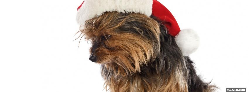Photo cute christmas puppy Facebook Cover for Free