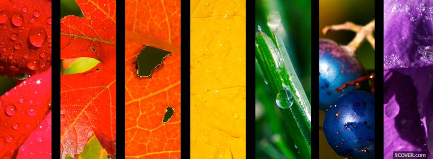 Photo nature colors creative Facebook Cover for Free