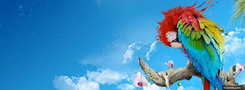 Photo colors bird sky creative Facebook Cover for Free