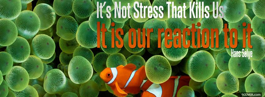 Photo reaction to stress quote Facebook Cover for Free