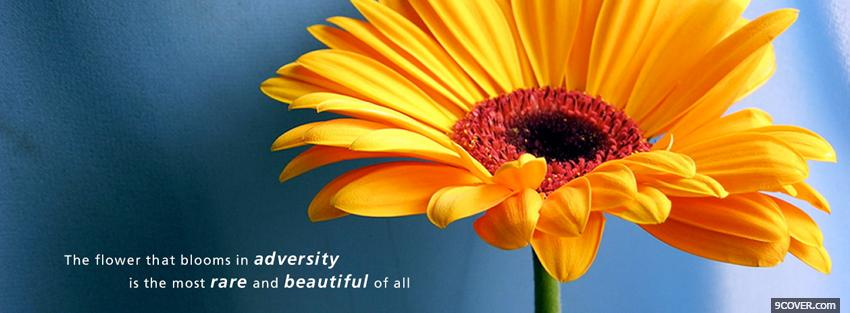 Photo the flower blooms quote Facebook Cover for Free